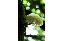 White cup Porcelain mushroom on the forest tree